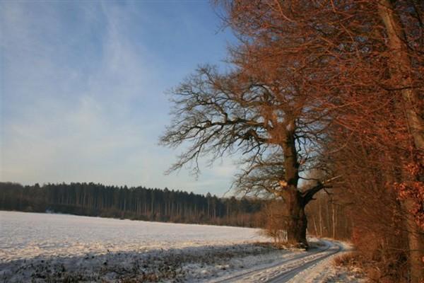 winter-s1-0199F5B790-46F6-F468-72BA-D3FA26FF1856.jpg