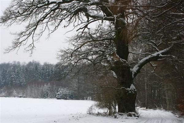 winter-s1-097797F14B-9570-D23A-0E37-20233187D808.jpg